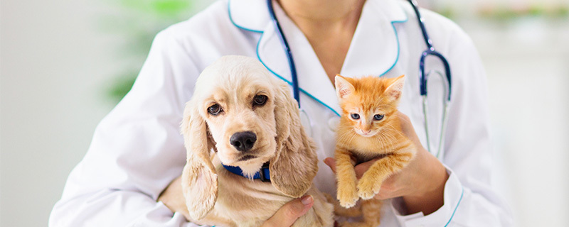 La transformation digitale de la profession vétérinaire : 3 questions au Dr. Annick Valentin Smith
